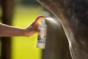 Pflege Pferd