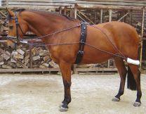 Harry's Horse Longierausbindezügel