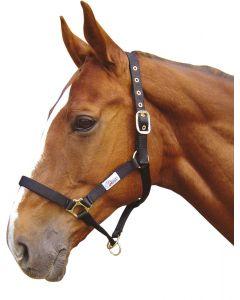 Harry's Horse Halfter Contoller zwart pony