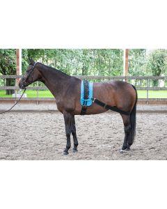 Harry's Horse Longiergurt elastisch