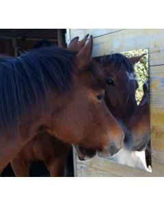 Hofman Spiegel für pferdeanhänger, box und Stall